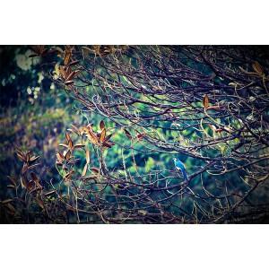 Urraca entre ramas