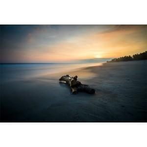 El tronco y el mar